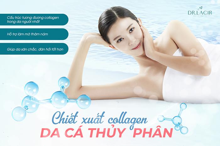 Collagen trong da cá